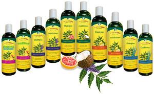 organix south theraneem shampoo