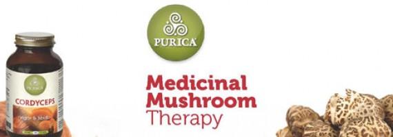 Understanding Mushrooms